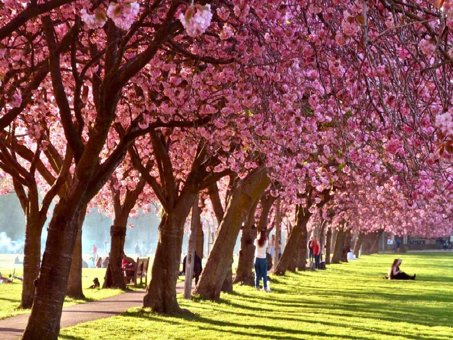 The Meadows, one of the best places to enjoy the sunshine in Edinburgh (Photo: Shutterstock)