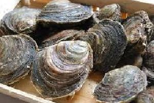 Oysters are the most high-risk food.