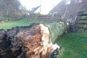 This tree fell into a house in the village of Barr.