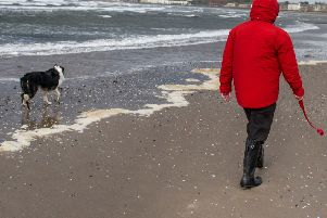 Dogs ill after beach walks