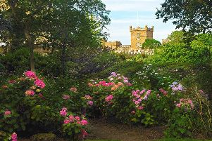 Culzean Castle gardens will be taking part in the Scottish Rhododendron Festival throughout April and May.