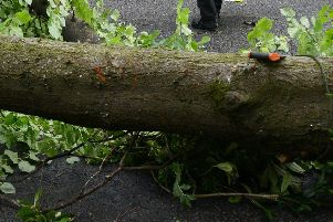 A fallen tree closed the A77 for several hours.