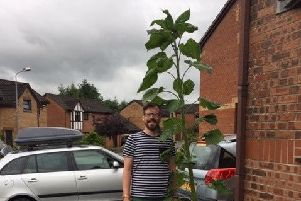 Grant Trainer with the sunflower he believes is the biggest in Cumbernauld