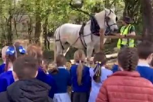 Roy Murray and his horse Bella visit the Woodland Centre at Kilsyth Primary to do some logging