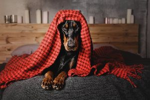 Dogs and cats are often scared by fireworks, Pic: Shutterstock