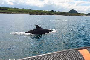 Dolphin sightings in Firth of Forth on the rise