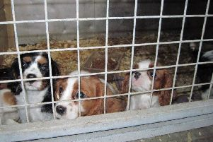 Irresponsible dog breeders could be stripped of their licences under new laws being drawn up. Picture: SSPCA