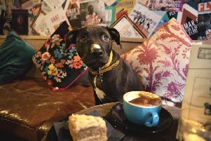 Staffordshire bull terrier Maisie gets comfy in the new monthly Dug Cafe at Cafe Voltaire.
