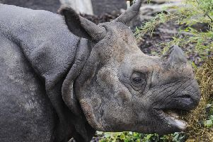 Edinburgh Zoo is home to a number of rhinos. Picture: Greg Macvean
