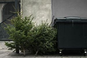 Not sure how to get rid of your Christmas tree in Edinburgh after the big day has been and gone? (Photo: Shutterstock)