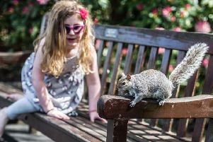 Don't be fooled by this little girl - grey squirrels are not cute. Picture: John Devlin
