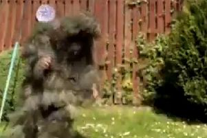 Fraser McIlroy in his bush camouflage in the viral video.