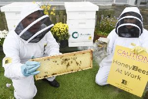 Capital Theatres' mission to help the bee population.