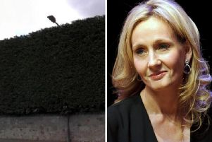 The author was already planning to take action and tree surgeons submitted a planning application to the council on her behalf.