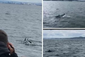 A pod of dolphins appeared in the Firth of Forth as the Hynd family were returning from a visit to Incholm Island.