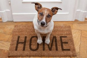 Tenants can now face additional rent charges of up to 600 annually to have pets in their home