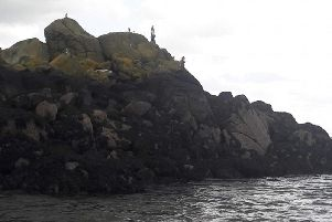 The gnomes have found a home in the waters off Inchcolm Island in the Firth of Forth. PIC: Contributed.