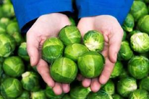 Spruce up your sprouts at Falkirk festive cooking workshop