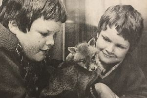 Murray Leishman (12) and Gavin Leishmen (9) with the injured fox they found