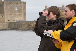 Bird watching at Blackness Castle