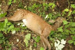 Police probe 'dog attacks' on deer in Camelon and Bainsford
