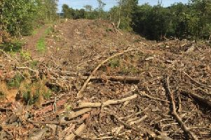 A large number of trees were cut down.