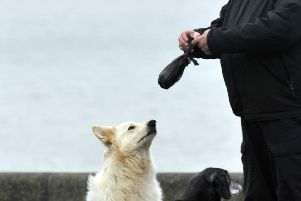 New idea to tackle dog poo on Buckhaven streets