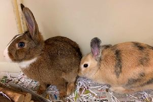 Belle and Hetty. Picture: SSPCA