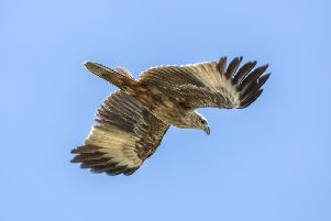 Efforts to tackle crime include a review of golden eagle disappearances.