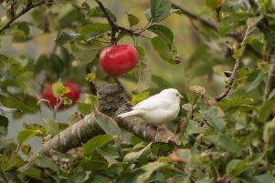 Reader James Cameron sent in this image of an unknown white bird