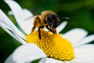 Column: The busy life of bees
