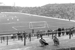 Two ducks taking in a match in May 1966. Picture: TSPL