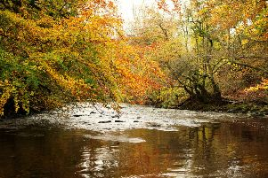 The Heritage Lottery Fund has given a grant of over �1.6m  for the RiverLife project on the Avon and Almond rivers
