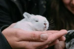 Kirkintilloch rabbit rescue launches appeal after record intake of animals