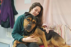 Sheera loves to be close to people as Dogs Trust Glasgow canine carer Nicole finds out