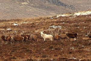 Marc Brunelle captured this photo of a white stag in the Perthshire Highlands. Picture: SWNS