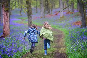 Picture: Kinclaven Bluebell Wood in Perthshire, Julie Howden/WTML