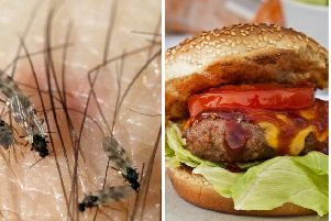 A hotel in Argyll is adding midge burgers to the menu. Pictures: Pixabay/Free Images
