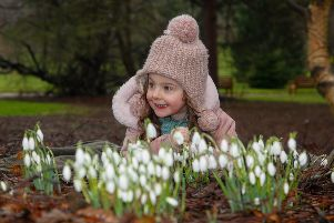 Brook Louden (4) from Lasswade enjoys the snowdrops currently on display at The Royal Botanical Garden in Edinburgh 3/2/17