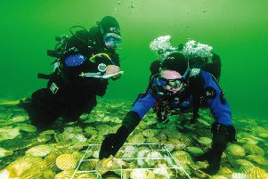 Caption one: scientists lay native oysters on the recreated reef in Dornoch Firth''Caption two: Glenmorangie's Hamish Torrie and Dr Bill Sanderson of Heriot Watt inspect the oysters