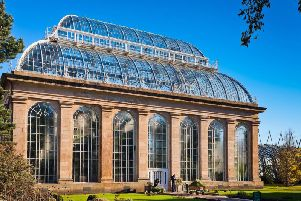 Some of the world's oldest trees could be rescued by a plan involving Edinburgh's botanic garden to buy a Chilean rainforest.