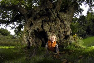 One of the Cadzow Oaks ' reputedly dating from the 12th century ' in the Clyde Valley Woodlands National Nature Reserve (Picture: Donald Macleod)