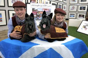 Scotties were among the surprise stars of the opening ceremony of the Glasgow 2014 Commonwealth Games. Picture: John Devlin