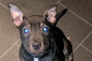 James Boyes, 21, has been told he cannot be reunited with his staffy cross dog called Bear by the Edinburgh Dog and Cat Home