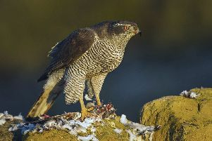Two of Scotland's rarest birds of prey found shot in the Borders