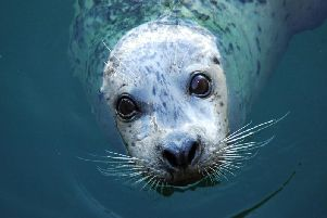 A Harbour seal (Picture: Shutterstock)