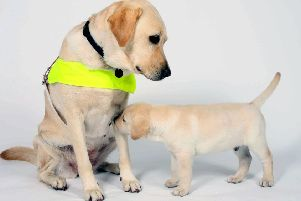 The treatment of guide dogs and their owners has been described as 'shocking'