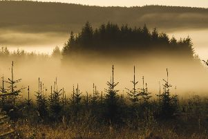 Forests contribute �1 billion a year to Scotland's rural economy, support 25,000 jobs and absorb vast amounts of carbon dioxide from the atmosphere
