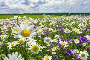 Wildflower meadows are found on less than 1 per cent of the UK's land area. Picture: contributed
