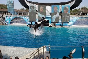 An image from SeaWorld. Picture: AP